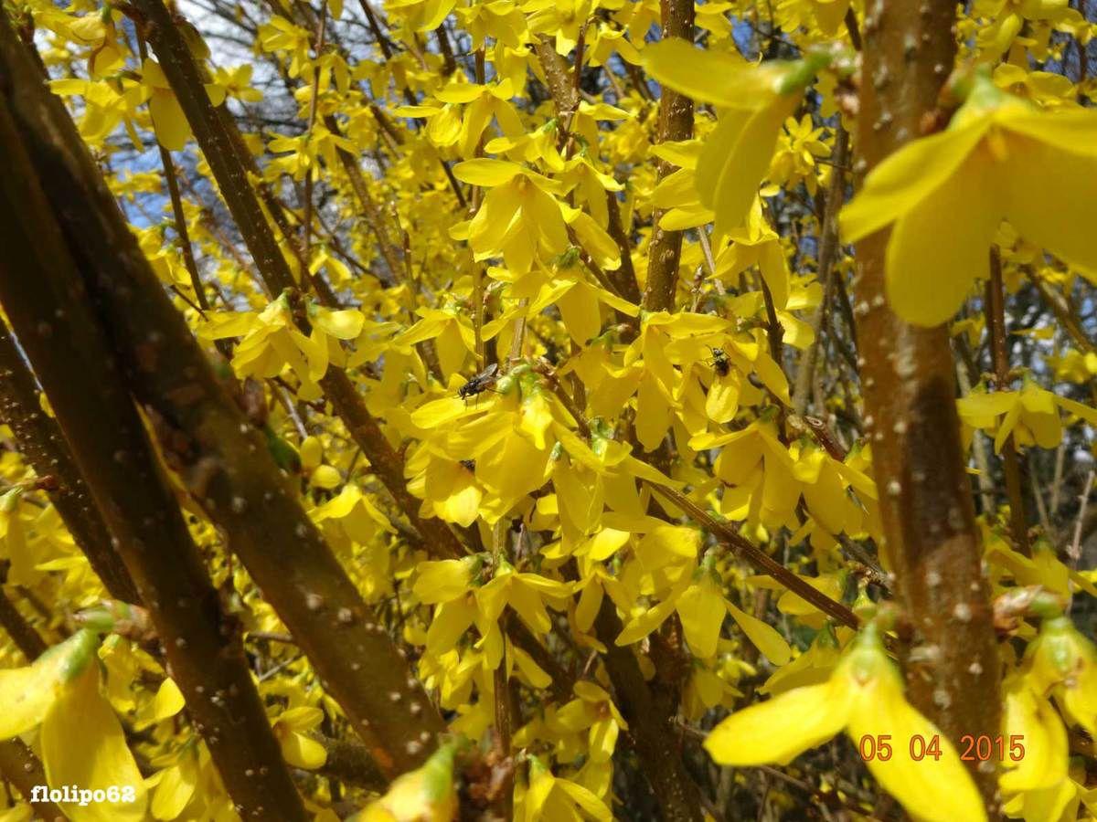 bambous au réconfort 5 avril 2015