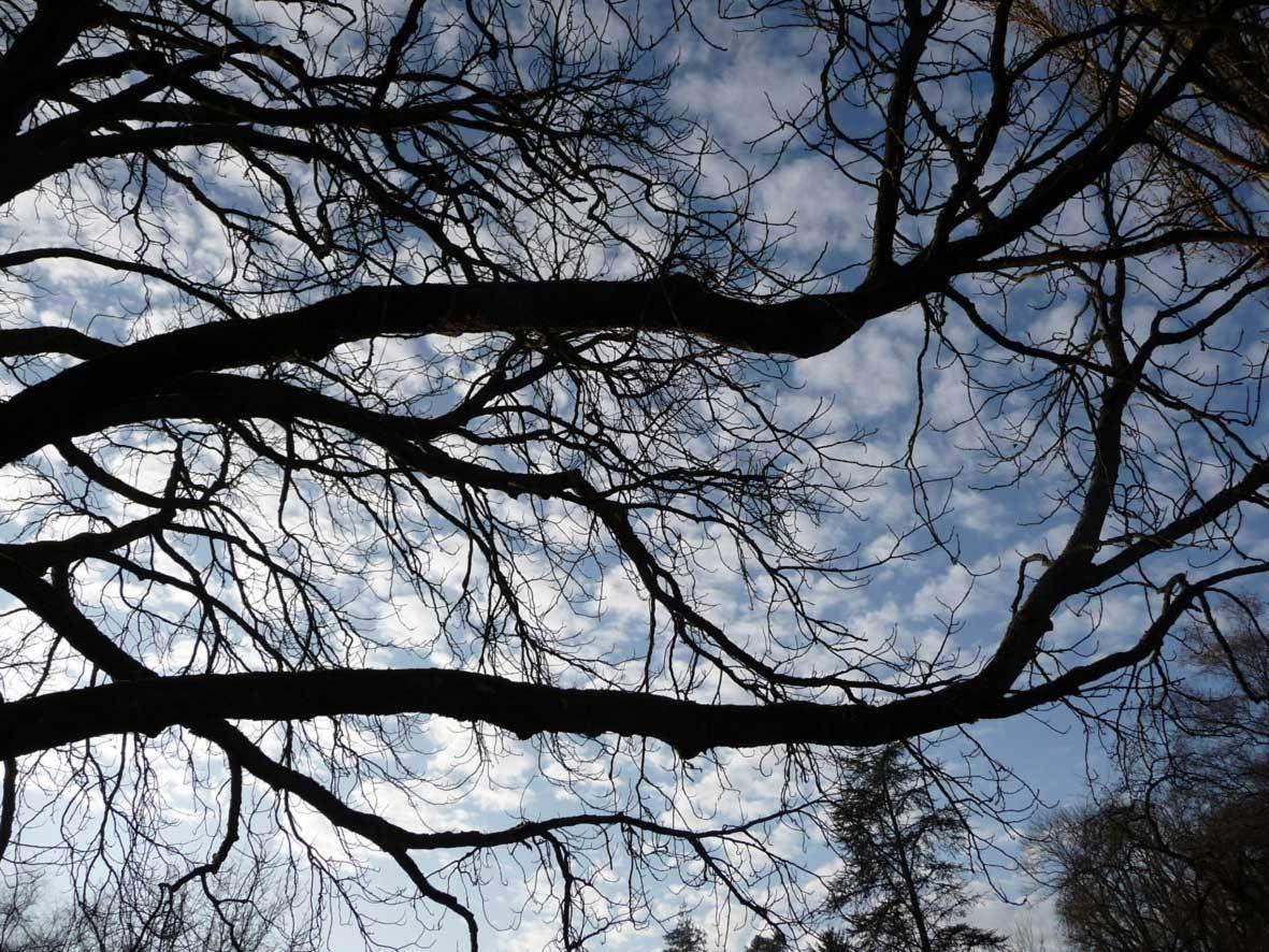 Au parc vauvert en janvier 2009