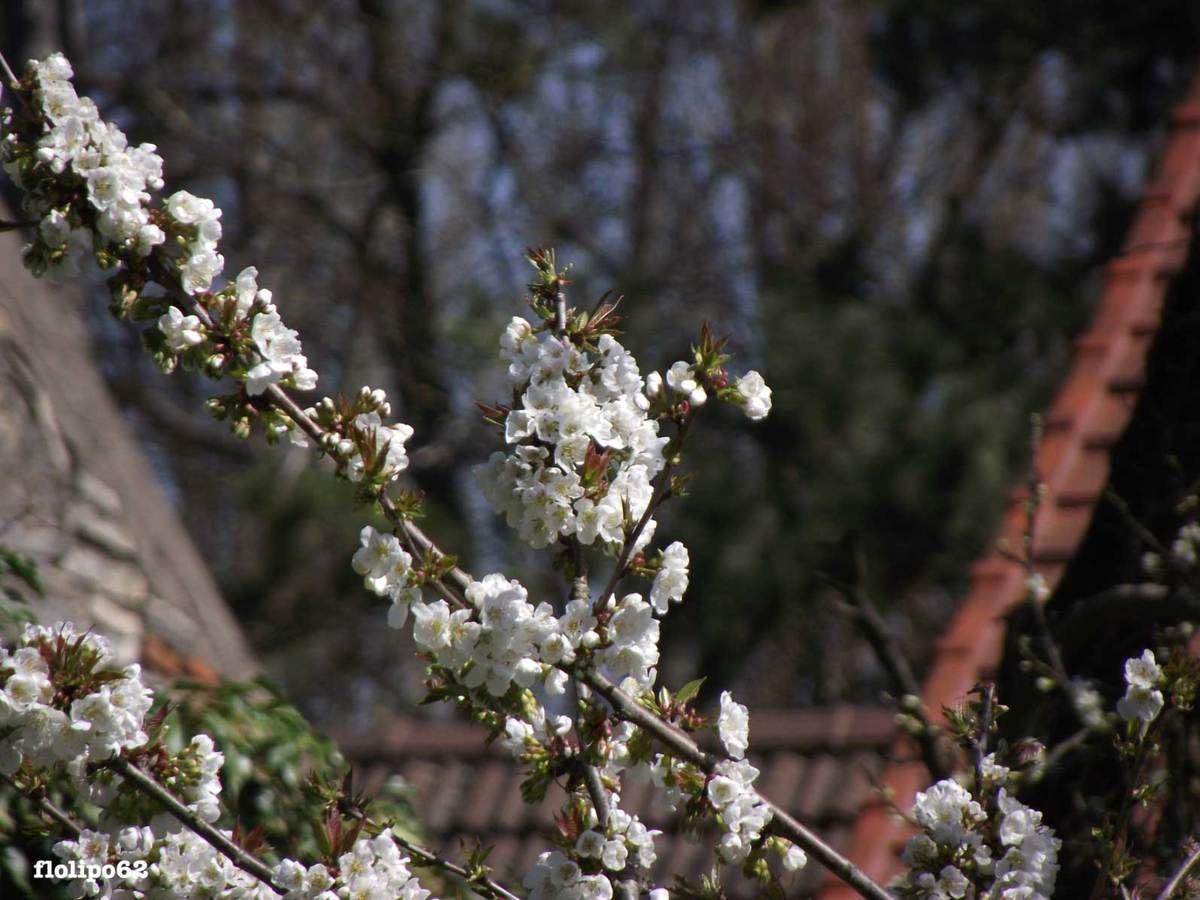 avril 2012 - le jardin