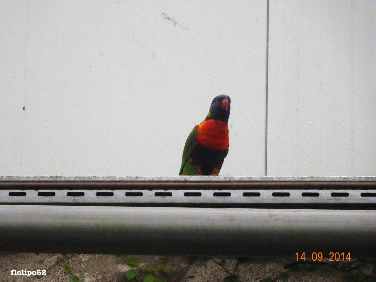 oiseaux du zoo de beauval 14 septembre 2014