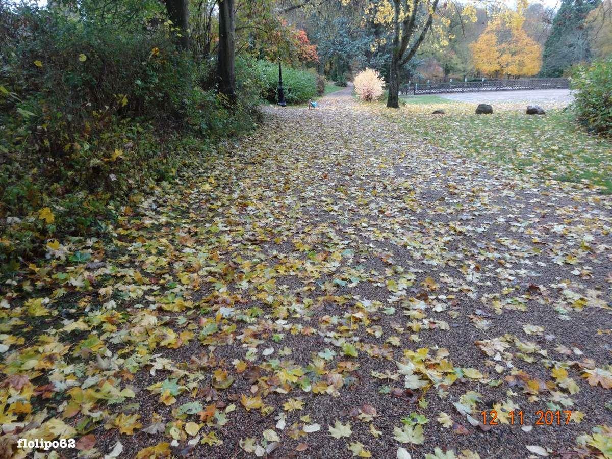 parc vauvert le 12 novembre 2017 - 1