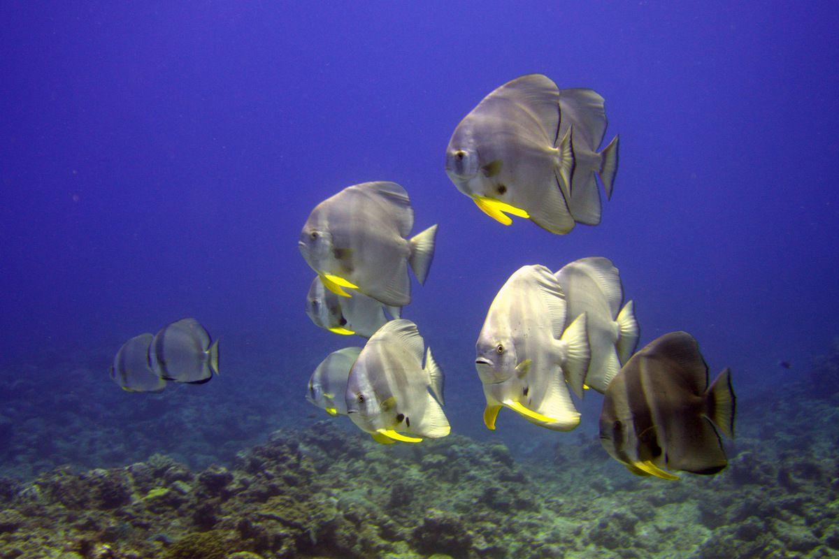 Pêle-Mêle sous-marin