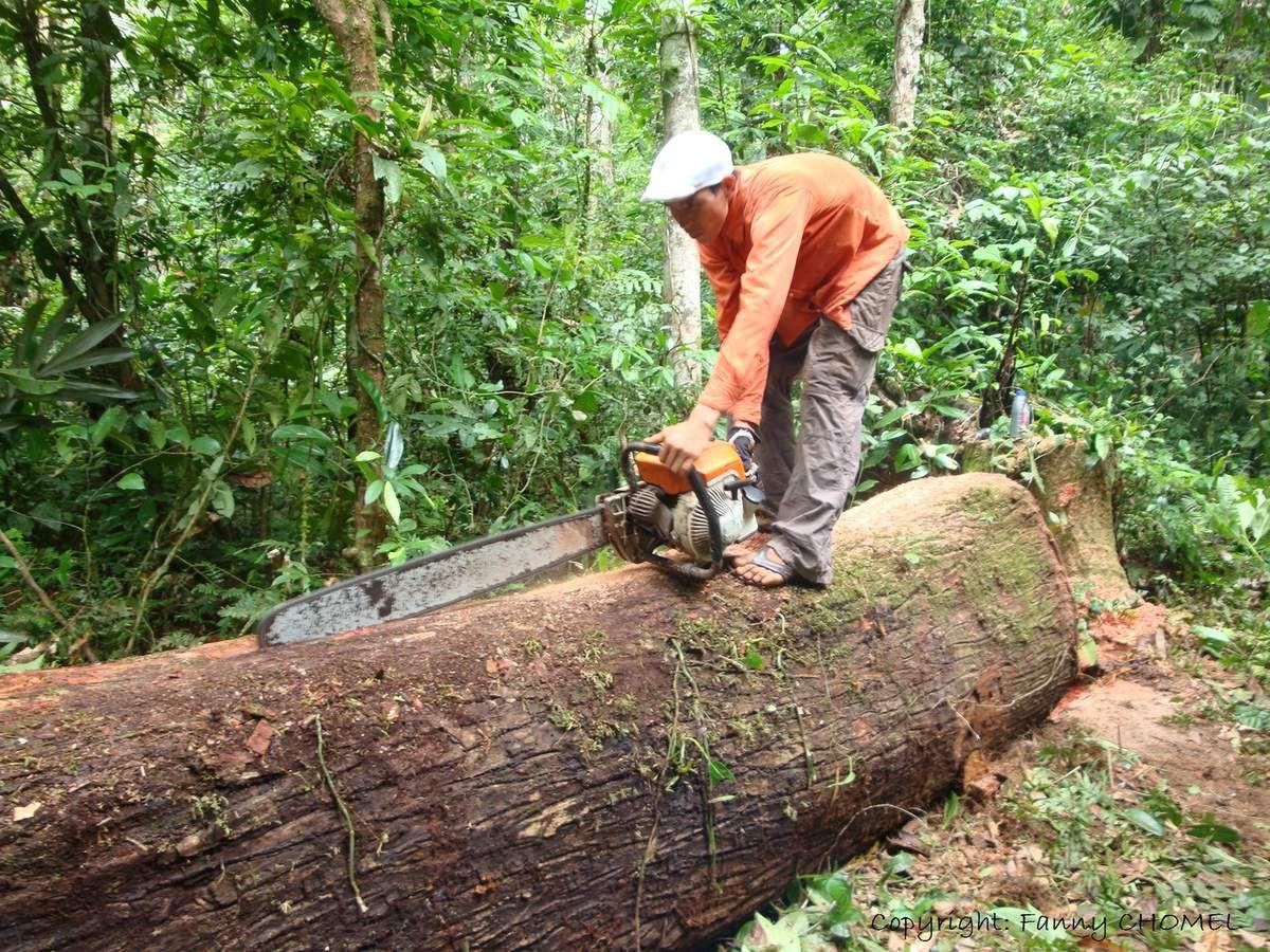 de l 39 arbre la planche regard sur l 39 exploitation du bois les robes vertes de l 39 am rique. Black Bedroom Furniture Sets. Home Design Ideas