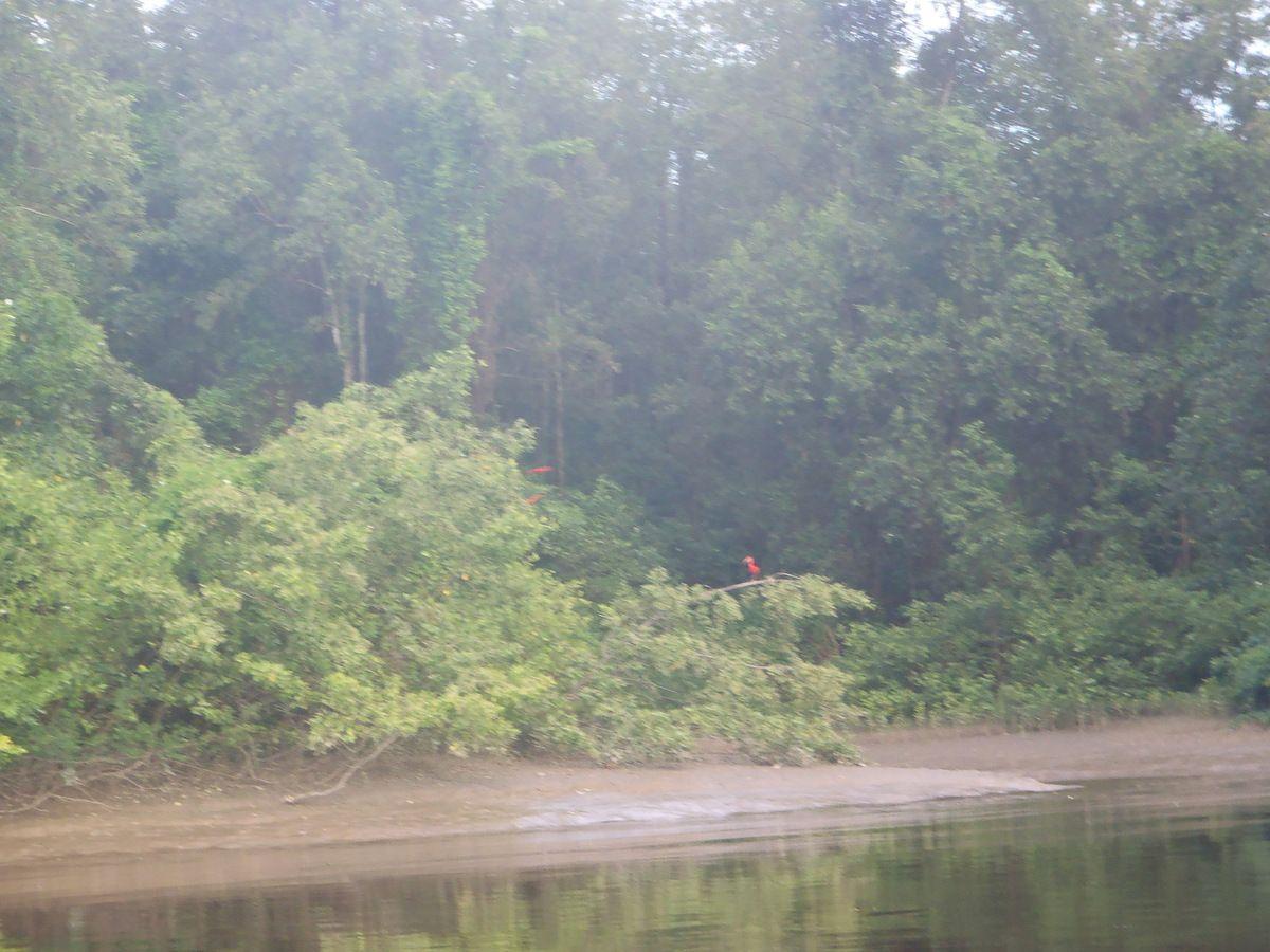 Les différents paysage lors de notre remonter du fleuve,