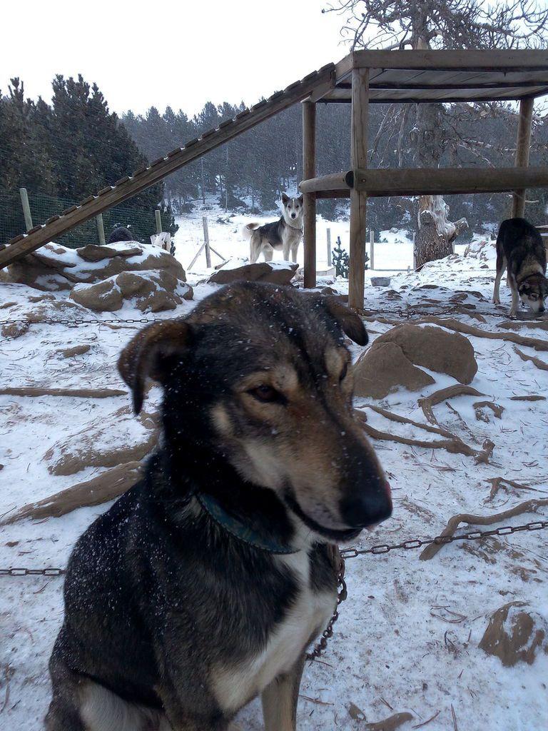 Parrainage 2016 pour la beaver trap trail alaskan team rando chiens de traineau pyrenees et - Relooking trap ...