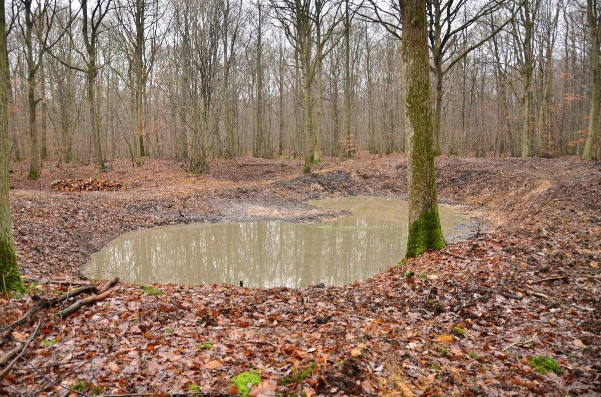 Bonjour,  Ci-joint l'article que nous avons transmis aux collectivités, sur la certification FSC® (Forest Stewardship Council®)* attribuée à la forêt régionale de Port-Royal.   Me tenant à votre disposition pour tout complément d'information, je vous remercie.     * Le label FSC® est une véritable reconnaissance du savoir-faire de l'AEV en matière de gestion forestière. En France, peu de massifs sont à ce jour certifiés FSC®: 32 000 hectares sont certifiés FSC® dont environ 8000 hectares de forêts publiques. Cette certification engage l'AEV à respecter plusieurs règles permettant d'exploiter la forêt, d'assurer sa régénération, son entretien et son ouverture au public tout en préservant les espèces animales et végétales.   Le cahier des charges est très exigeant ; il engage notamment l'AEV à garantir la sécurité des travailleurs forestiers, à limiter l'impact des travaux, à repérer les zones à protéger et à travailler en étroite concertation avec les usagers. À ce titre, le site  de  la forêt de Port Royal fait l'objet d'un contrôle rigoureux lors de chaque audit : le dernier a eu lieu en décembre dernier, et s'est avéré concluant : la certification a pu être renouvelée.       Bien cordialement,   Angélique LUCAS Chargée de médiation et communication locale Service aménagement et gestion  AEV-IDF-logo-web Cité régionale de l'environnement Agence des espaces verts de la Région d'Ile-de-France 90-92, avenue du Général Leclerc 93500 PANTIN Tél : 01 83 65 38 11 - Port : 06 80 58 91 5