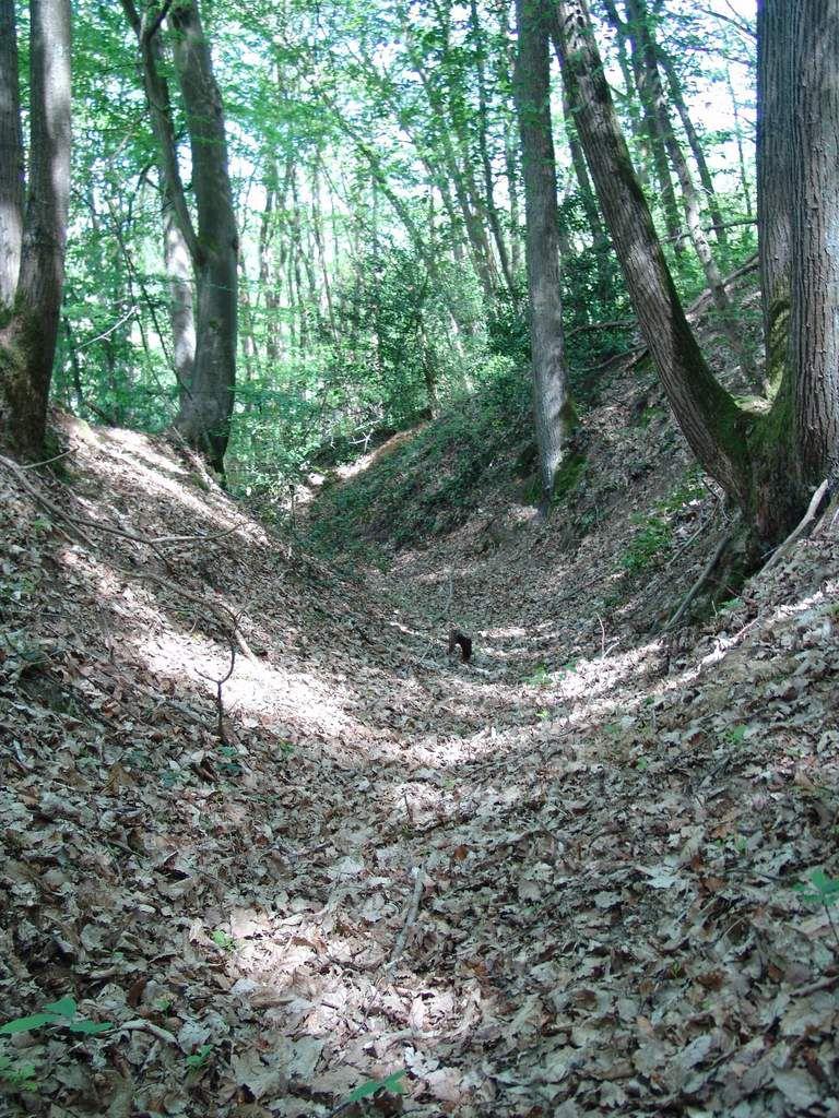 Chemin creux forêt de la Madeleine
