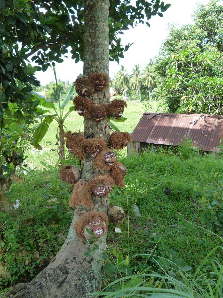 Bali, les premières images