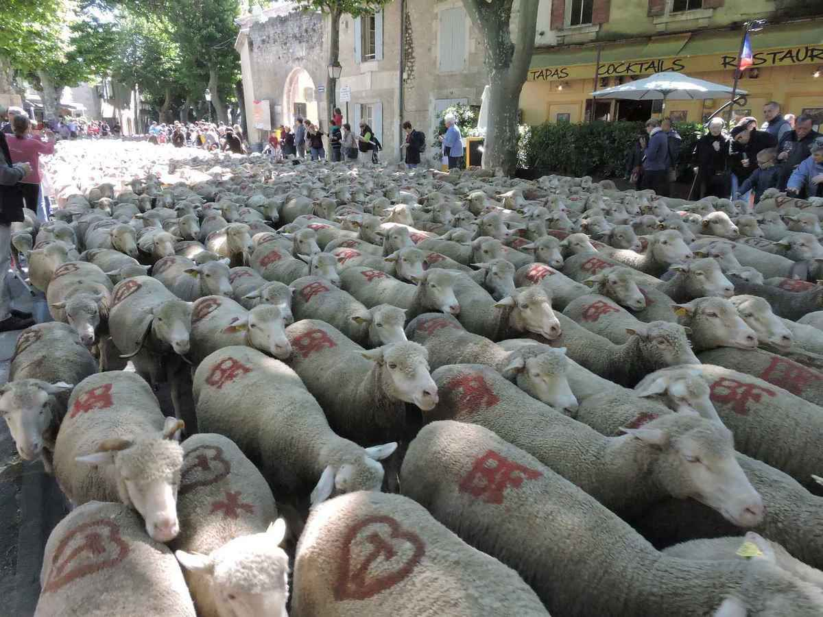 L 39 estrangi e li santoun for Entretien jardin st remy de provence
