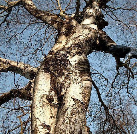 Juger l'arbre par ses fruits