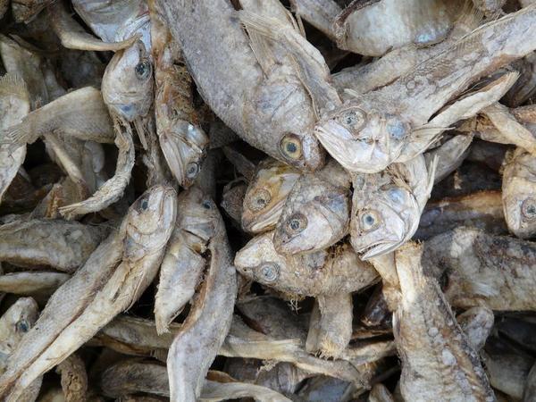 le marché au poisson de Gangtok