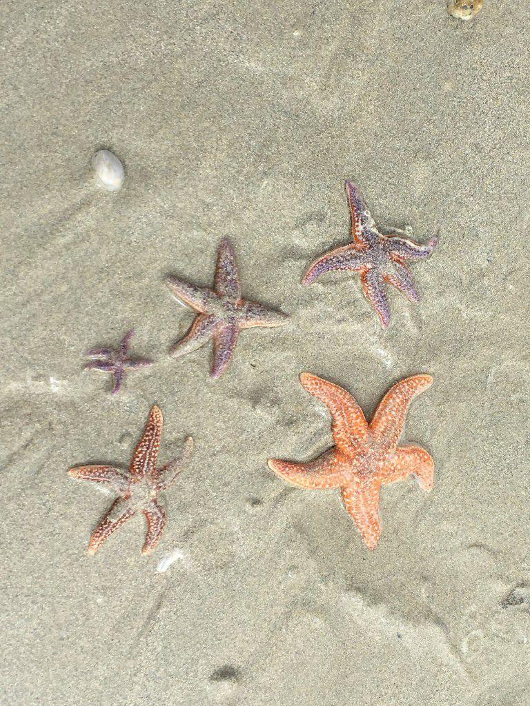 Pluie d'étoiles sur l'océan