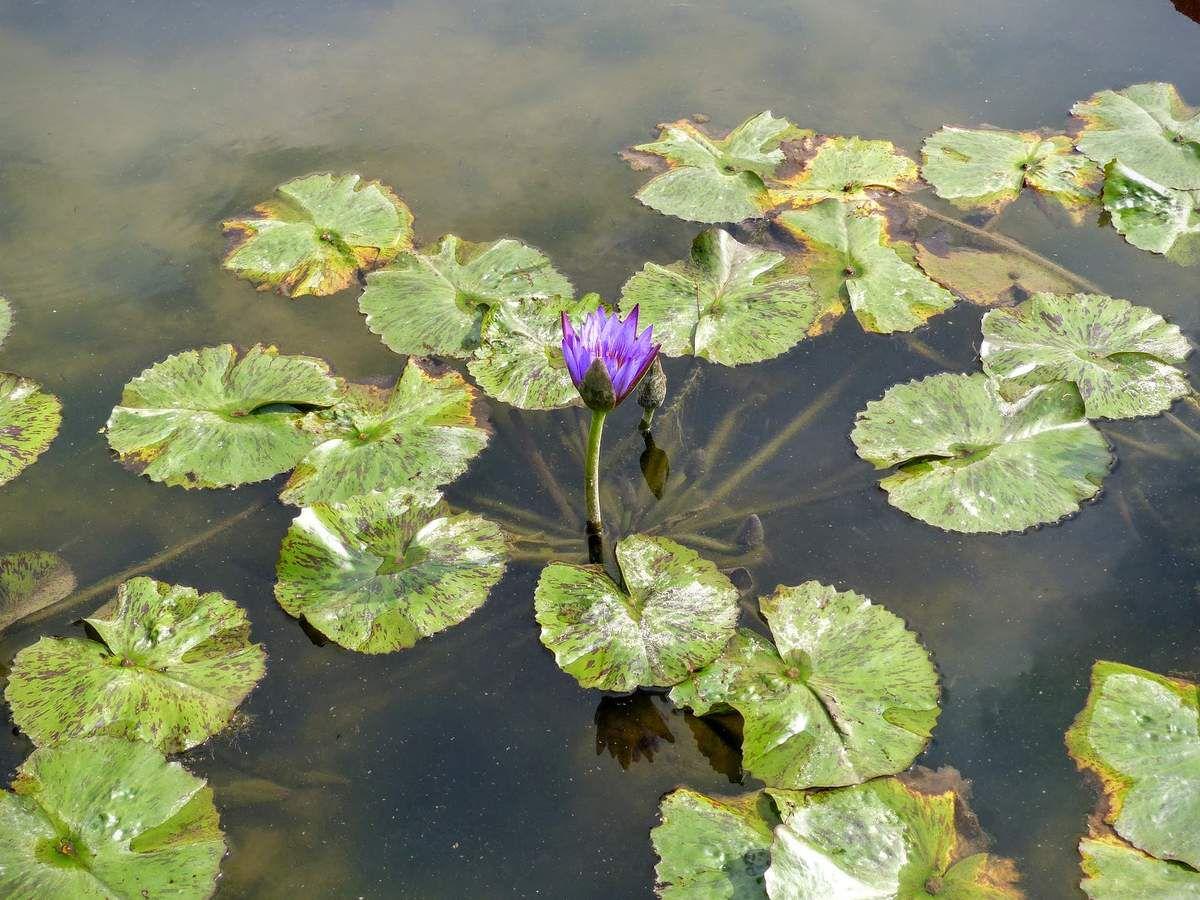 Seodong Park et Gungnamji Pond&#x3B; de belles fleurs&#x3B;