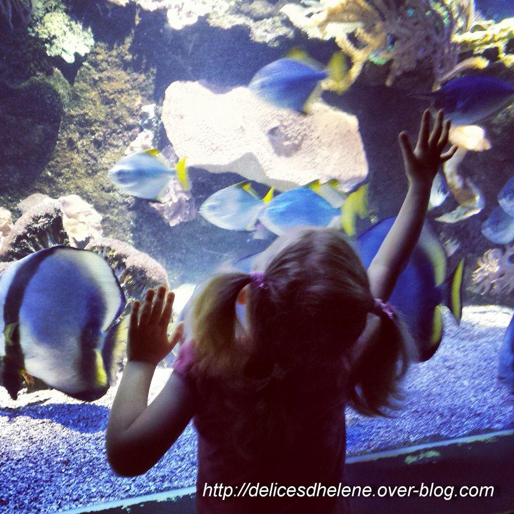 Une visite à l'aquarium lorsque le temps n'était pas trop de la partie