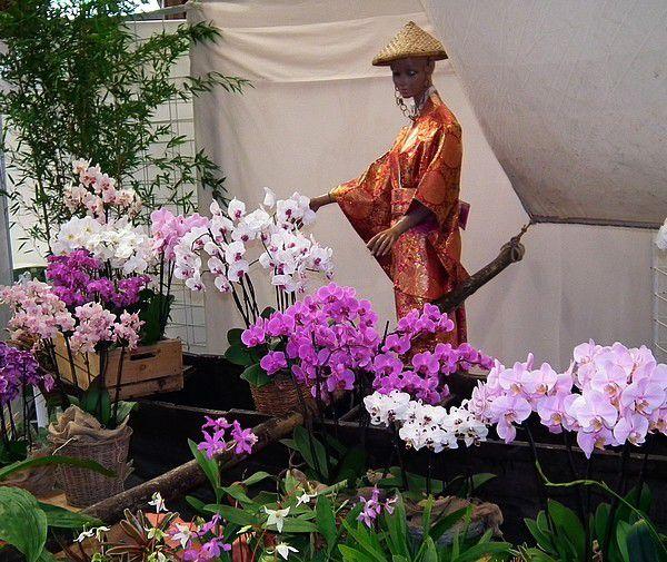 Passion Orchidées... ma visite....