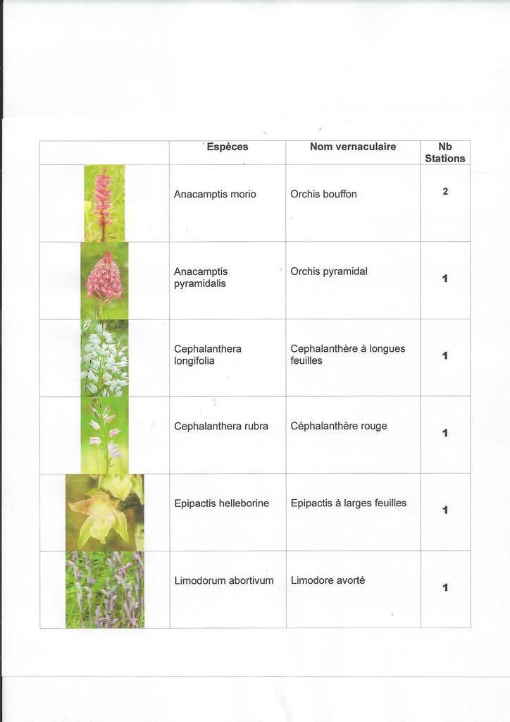 LES ORCHIDEES DE LA COMMUNE DE LAVOUX