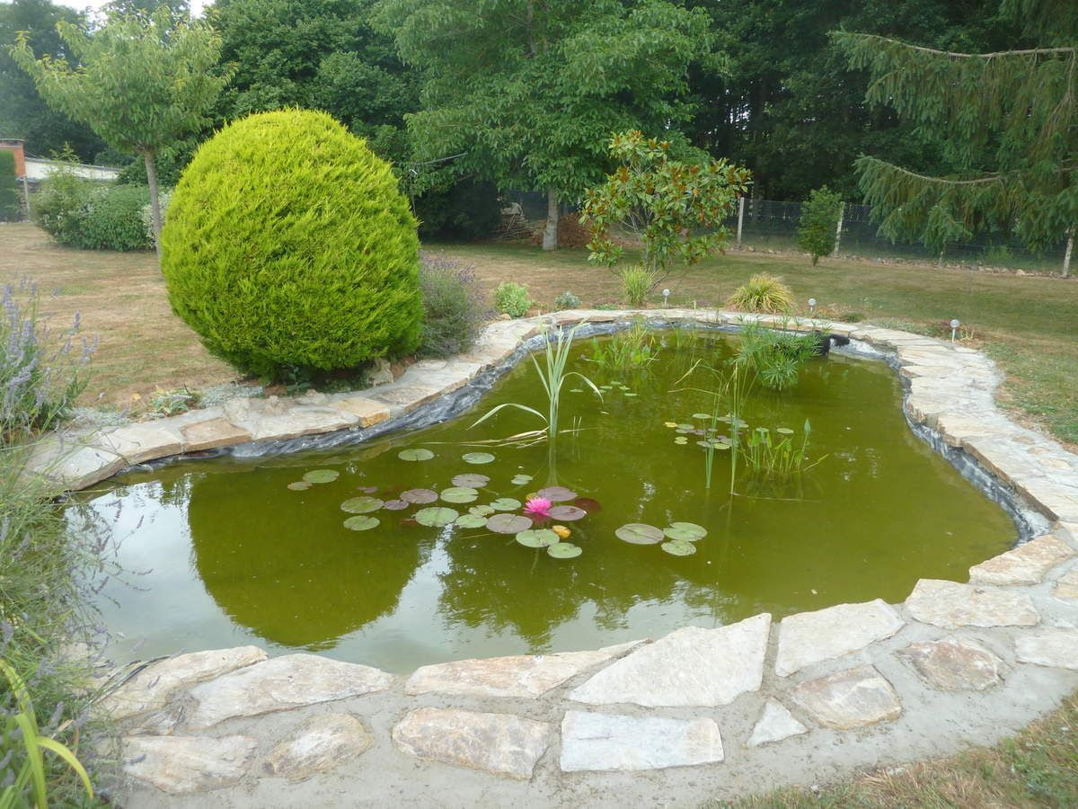 Creation bassin aquatique yvelines eure et paris jardin for Materiel bassin aquatique