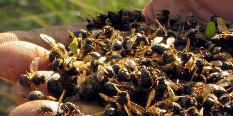 France: Charente et Charente-Maritime : c'est l'hécatombe dans les ruches d'abeilles