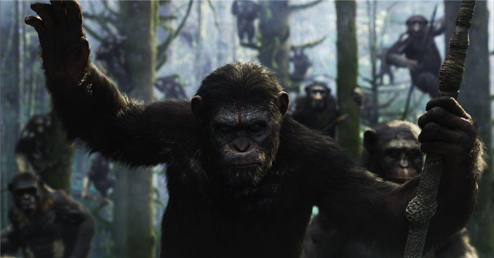 Attaques organisées de singes envers la population: quand la réalité rejoint la fiction!