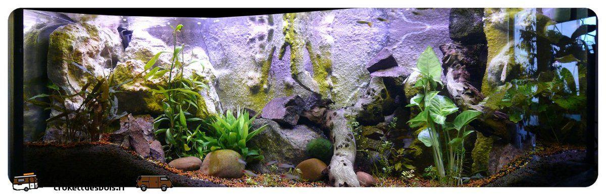 Un nouveau décor pour l'aquarium...