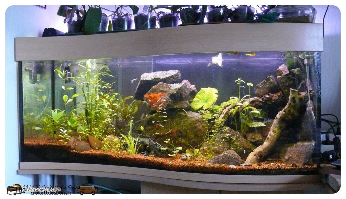 D cor aquarium artificiel for Deco aquarium