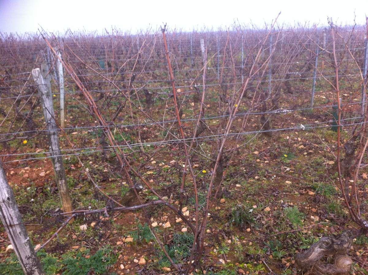 Le travail de la vigne n'a pas commencé.