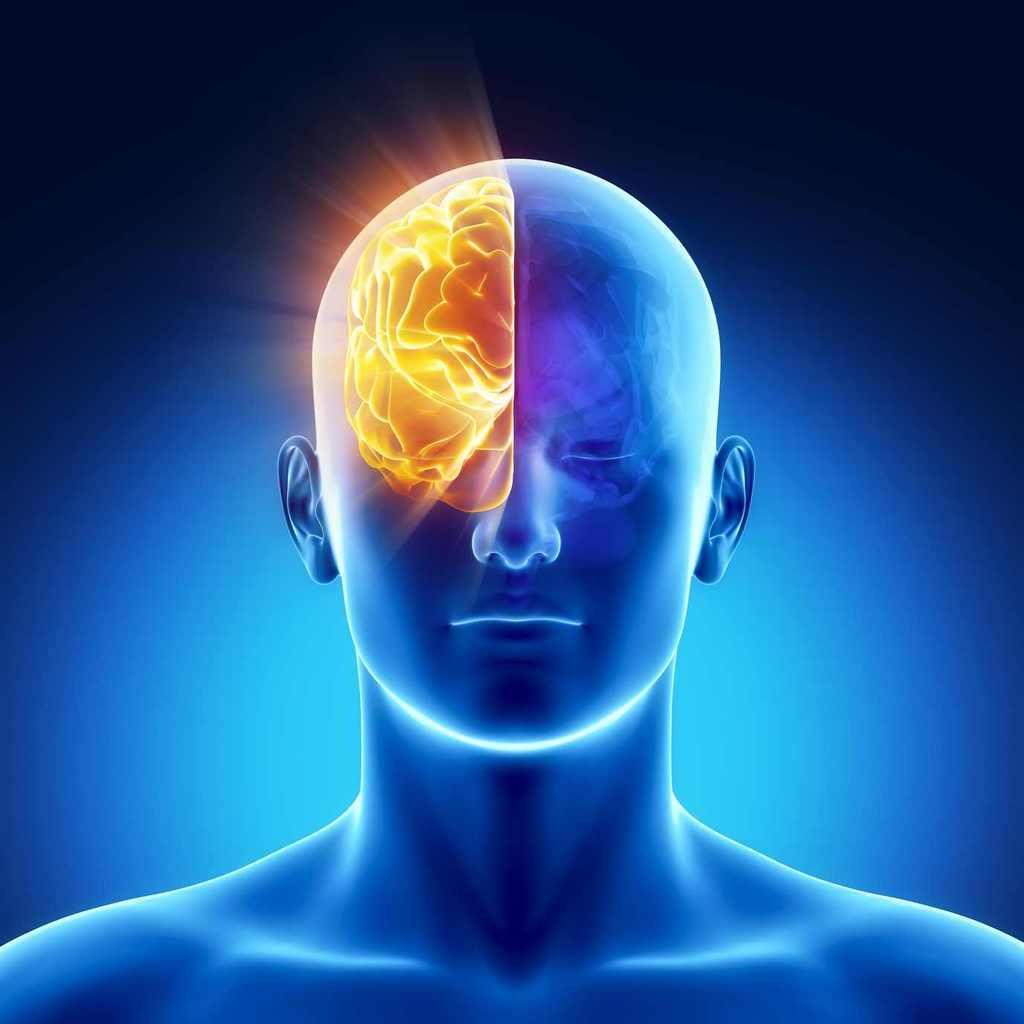 L'homme n'utilise pas uniquement 10% des capacités de son cerveau