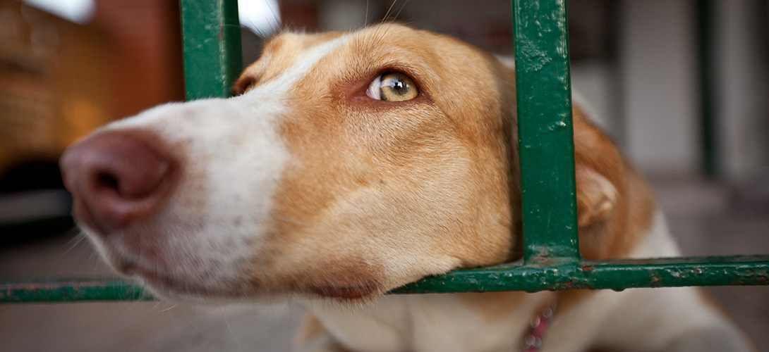 Le FBI veut mieux détecter la cruauté envers les animaux pour repérer les futurs meurtriers