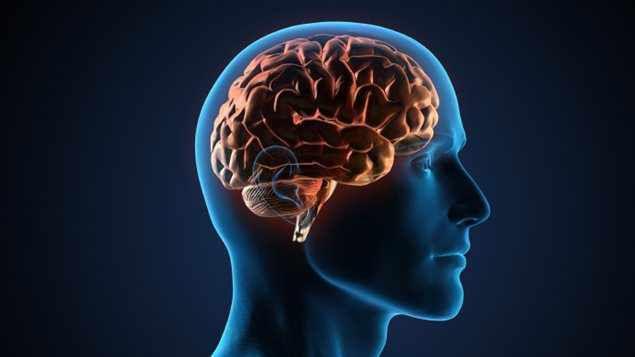 Notre cerveau serait plus gros le matin