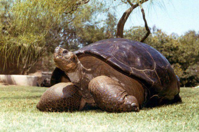 Une tortue âgée d'environ 150 ans meurt au zoo de San Diego