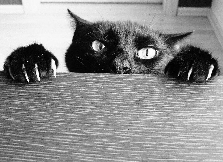 5 bonnes raisons de ne pas dégriffer son chat