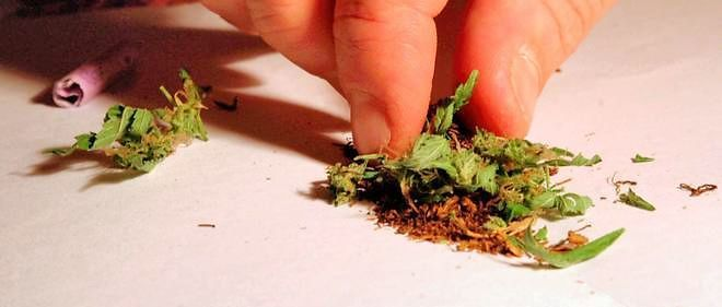 Canada : le cannabis légalisé au printemps 2017
