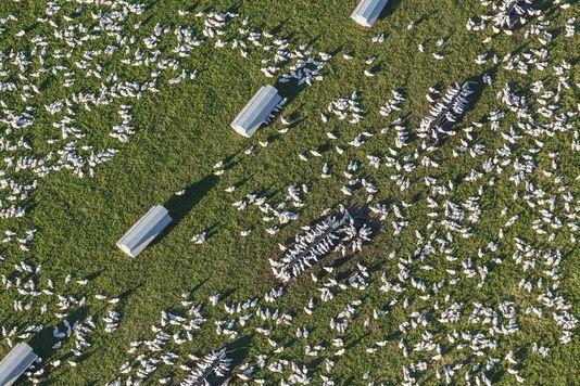 La grippe aviaire sous haute surveillance
