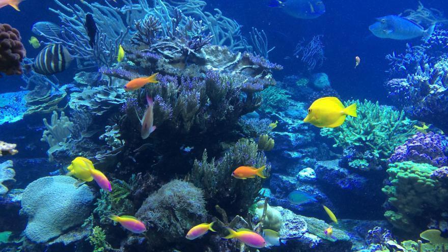 Les poissons boivent-ils de l'eau ?