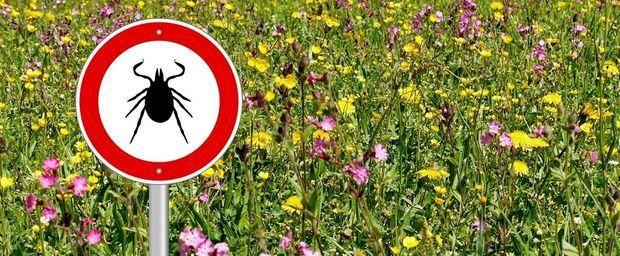 Tiques, moustiques, aoûtats : nos bons conseils pour s'en protéger cet été