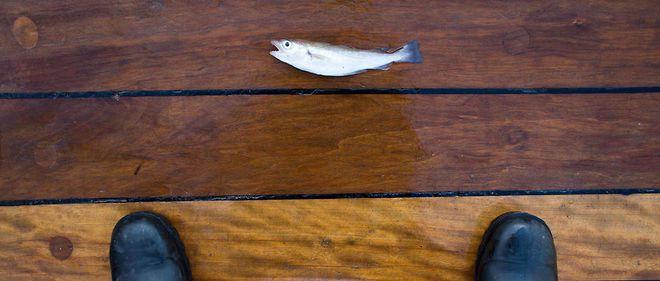 Des océans bientôt vides de poissons ?