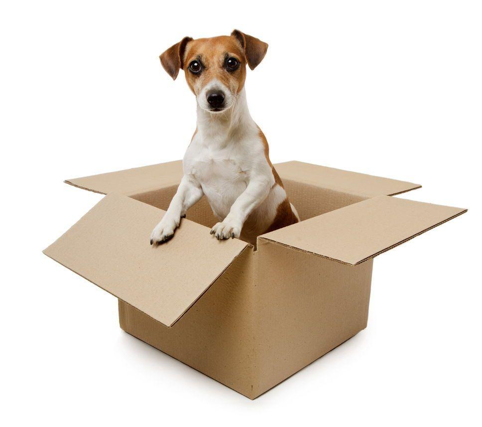 10 trucs pour déménager avec un animal