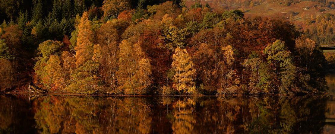 Pourquoi les feuilles des arbres tombent-elles en automne?