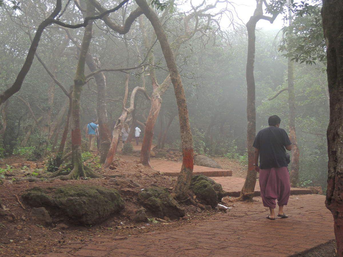 On découvre les paysages à travers ces petits chemins au milieu des arbres