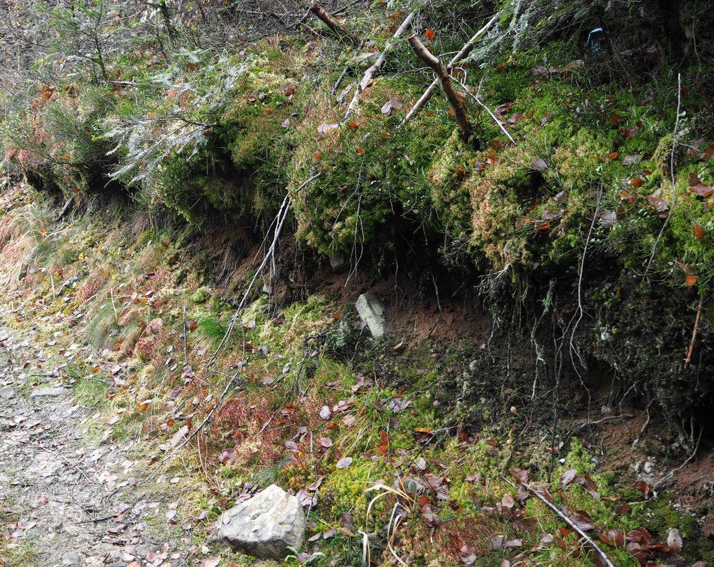 Les dernières feuilles tombent aux Blanfols