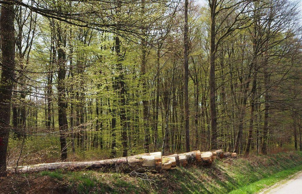 Sentiers de Pierres, forêts communales, le chantier d'insertion fait les affouages