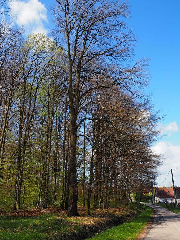 Le Grand Bois au printemps