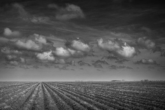Copyright Randy Nyhof,  Field with Billowing Clouds No.0046, voir le lien.