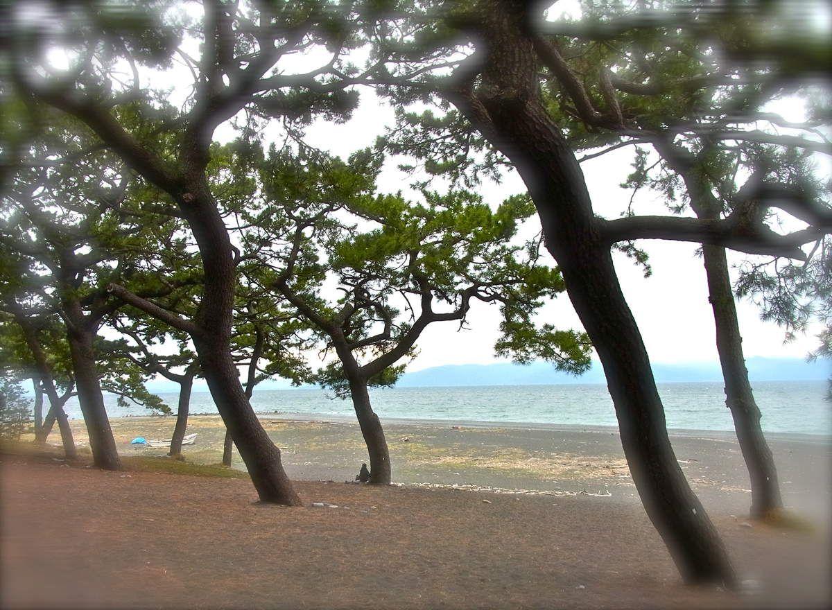 Les pins, aux troncs penchés, poussés par le vent de la mer, comme s'ils essayaient d'avancer, bravant le vent de la terre!