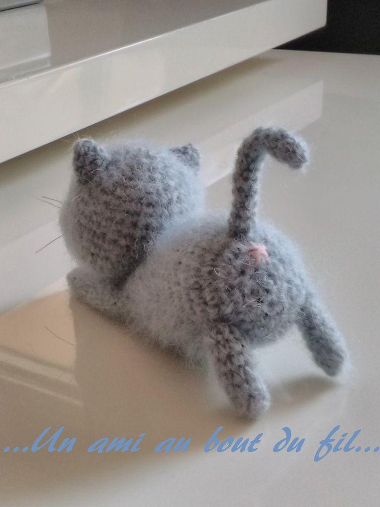 ...Petit chaton cherche famille...