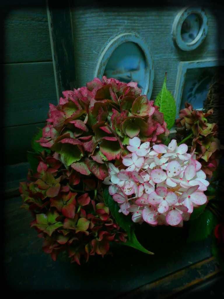 Fleurs d 39 automne steph for Fleurs automne