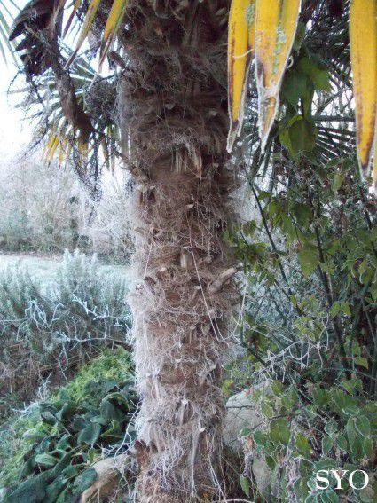 Narnia en Anjou, pour le premier jour de la nouvelle année 2015