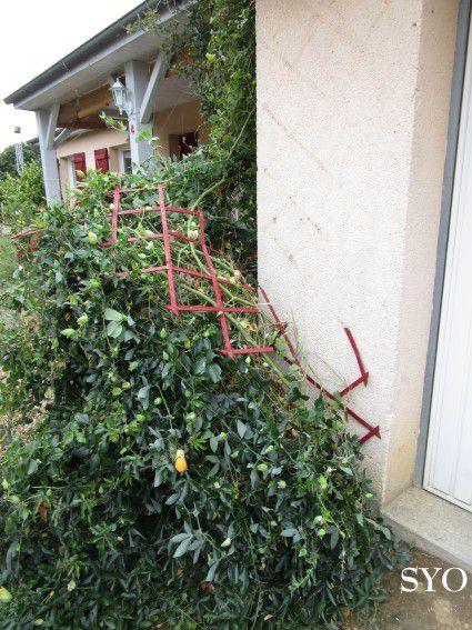 Coup de vent au Jardin de Fille
