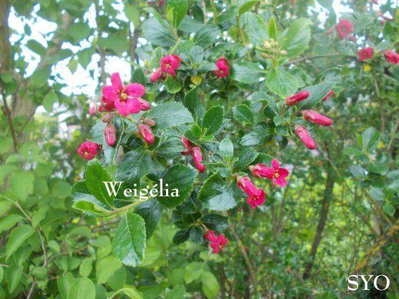 Au Jardin de Filles: Fleurs et départ des Bébés Tourterelles