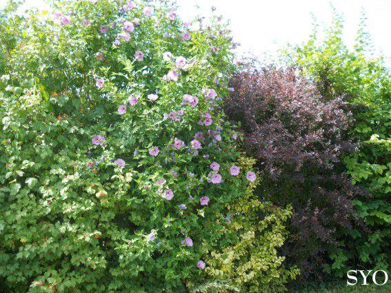 balade au jardin d 39 hibiscus chez mamigoz. Black Bedroom Furniture Sets. Home Design Ideas